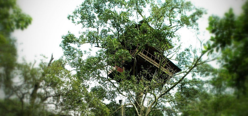 tree-houses -in -wayanad