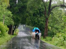Seasons in India-Different Types of Seasons in India